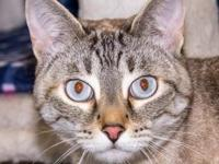 Sophie's story Sophie is a very striking cat with a