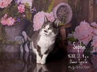 Sophie's story SOPHIE WAS SPAYED PRIOR TO ARRIVING TO
