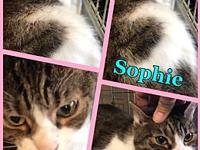 Sophie's story Poor Sophie landed at a kill-shelter