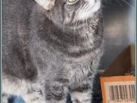 Sophie's story $97.50 FEE INCLUDES: neutering/spaying,