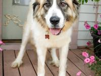 Meet Sophie, a young Great Pyrenees with beautiful