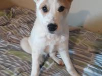 Sophie - female, spayed, 7 months, likes kids and other