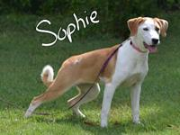 Sophie's story Sophie is a sweet playful puppy in
