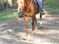 Eight-year-old sorrel paint-bred barrel horse. Has also