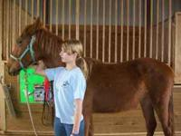 Beautiful red coat and mane, 1 1/2 years old, very