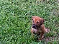 I have a Male South African Boerboel born May 15,2014
