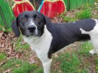SOUTH is a 2 year old Pointer/Hound Mix. He is 35lbs