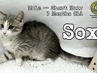 Sox's story You can fill out an adoption application