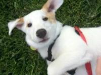 Spaniel - Cooper - Medium - Baby - Male - Dog Click