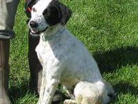 Spaniel - Elijah Adopted - Large - Adult - Male - Dog