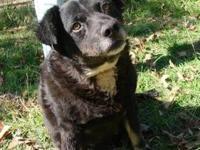Spaniel - Katrina - Medium - Adult - Female - Dog ADOPT