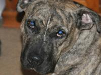 Spaniel - Violet - Large - Young - Female - Dog Violet