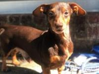 Spanky's story Hello there! My name is Spanky. I am a