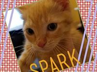 Spark's story All of our kittens are in various foster