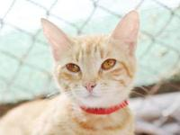 Sparkle's story - Sparkle is a sweet faced little lady