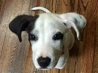 Sparkle's story Dalmatian/Hound Mix (our best guess