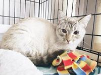 Sparkle's story Sparkle is 1.5 years old, spayed,