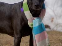 Hi, I'm Sparkle! My friends at Brown Dog tell me that I