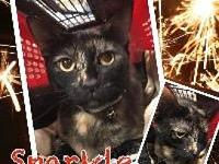 sparkles's story Sparkles is a gorgeous tortie looking