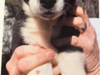 Sparks is a very sweet and playful Border Collie/German