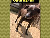 Sparky/CP's story Please complete our application at: