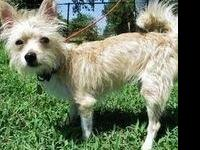 Adoption fee is $150, this dog is approx. 4 yrs old and