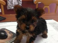 GORGEOUS PUPPIES PET STORE,7931 SW 40 ST FRONT TROPICAL