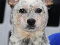 Up for adoption, meet Speckie! Speckie is a beautiful