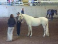 This is a really nice mare that is patterned very well,