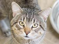 Spencer's story Spencer is an adult, neutered male cat,