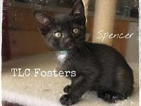 Spencer's story Sweet, well socialized kitten! Been