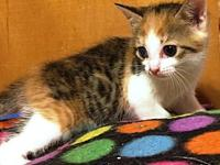 Spice's story Miss Spice is just 8 weeks old but she is