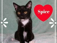 Spice's story Spice just loves to be put front and