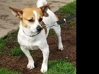 Hi my name is Spike! I am a male Chihuahua. I am shy at