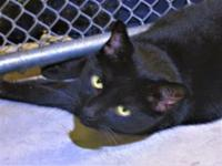 Spike's story Spike and Angel are a bonded pair. Adopt