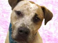 Spinks's story Spinks is a very gentle, sweet dog who