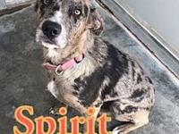 My story Spirit is a 1-2 yr old heeler mix. What a