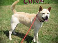 Spitz - Chloe - Medium - Adult - Female - Dog We are