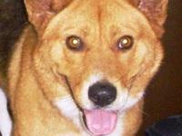 Spitz - Peaches - Medium - Adult - Female - Dog Peaches