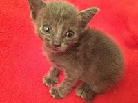 Splinter's story This sweet girl is the runt of the