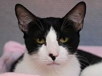 My story Spock is a handsome 5-year-old male, tall and