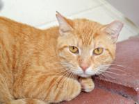 Spooky is a handsome 4 year old male.  He came to the