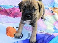 "My story I'm Spooky  One of the ""Halloween"" puppies. My"