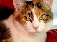 Spot's story The Calico Gal Gang is here----just