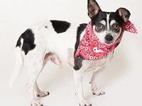Spots's story Available to foster or adopt! Breed: