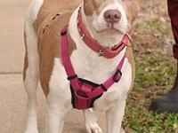 Spotsylvania Shelter #18- 'Kayte''s story You can fill