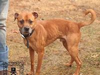 Spotsylvania Shelter #18-1037's story You can fill out