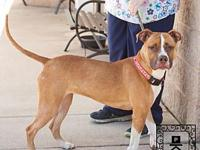 Spotsylvania Shelter #18-1863 Nala's story You can fill