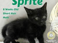 Sprite's story You can fill out an adoption application