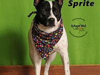 Sprite's story I have a sponsor buddy! My adoption fee